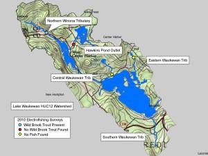 Waukewan Fish Surveys 2010